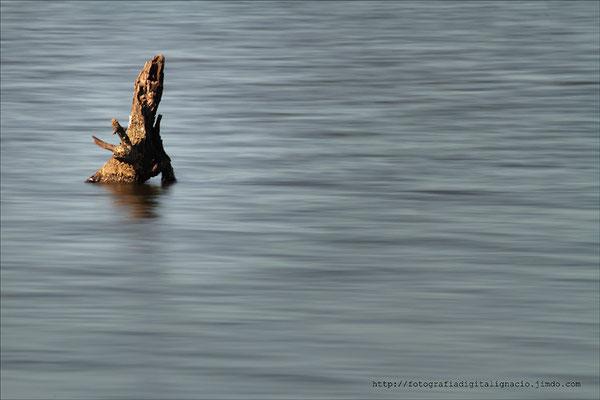 Un tronco en el agua.