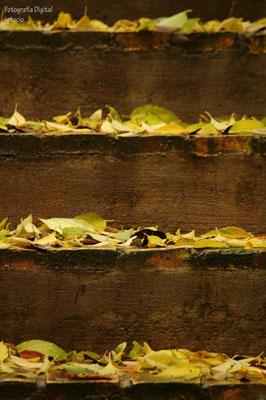Escalera de hojas