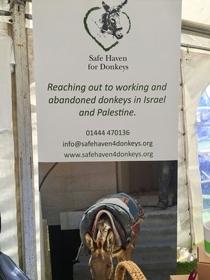 safe haven for donkeys rescue