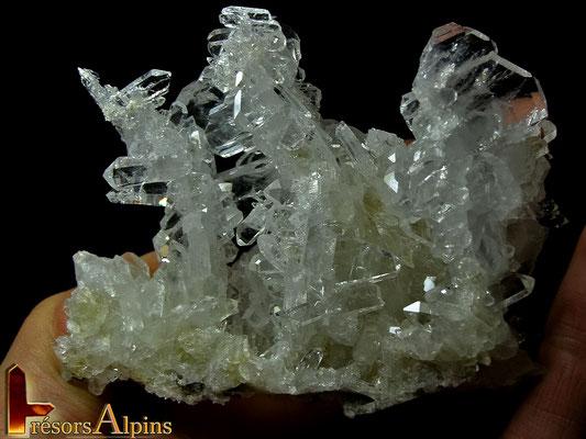 """""""La Forêt"""" (face arrière) ; groupement de quartz à âmes (Savoie)"""