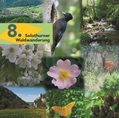 Die Waldwandwanderungen Jura und Mittelland - top vorbreitet auf Ihrer Jurawanderung