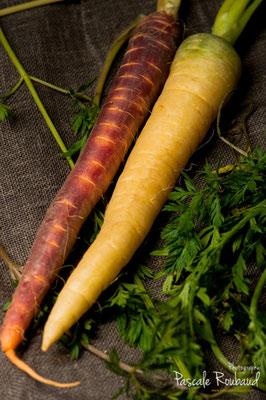 Les carottes anciennes
