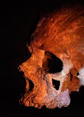 L'homme de Cro-Magnon, Musée de l'Homme, Paris