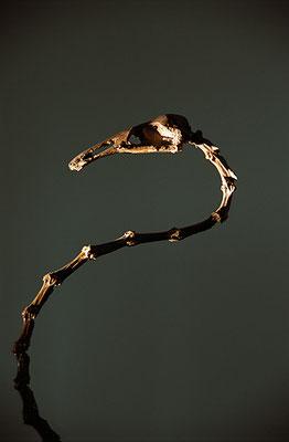 """""""L'oiseau"""", Musée des Confluences de Lyon"""