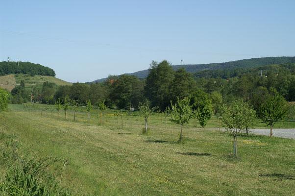 Patenbaumwiese im Jahr 2007