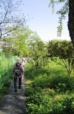 国際センター周辺は学会開催の為、臨時の散策路が作られていました