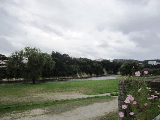 澱橋からの広瀬川 もう秋なんですね コスモスが告げてくれました