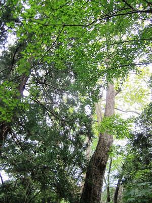 木々に囲まれ 静かな空間