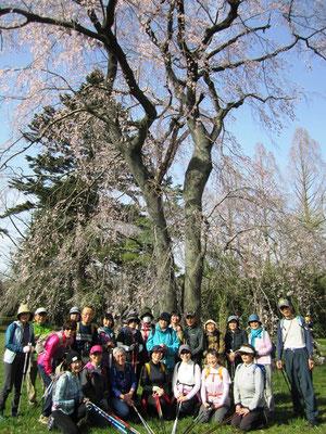 しだれ桜の木の下で
