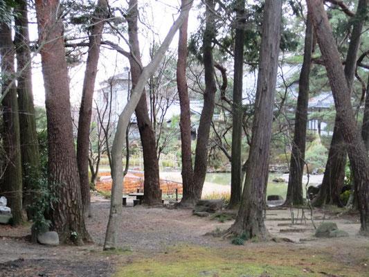 垣根ごしに輪王寺の庭を見せて頂きました   どうもありがとうございました