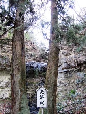 スーッと伸びる夫婦杉の間から見える不動滝の流れ