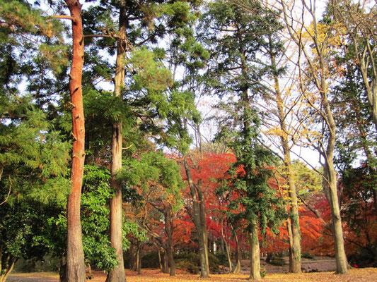 西公園の木々