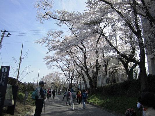 桜の小径入り口