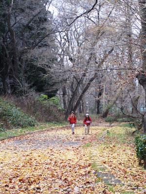 落ち葉いっぱい じゅうたんの道