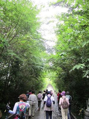 輪王寺山門をくぐり抜け緑の木立に囲まれ涼を感じました