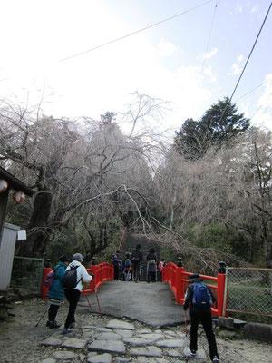 亀岡八幡宮の石段へ