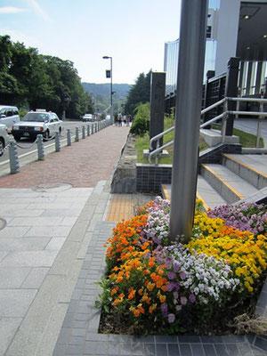 東西線:大町西公園入口の可愛い花達