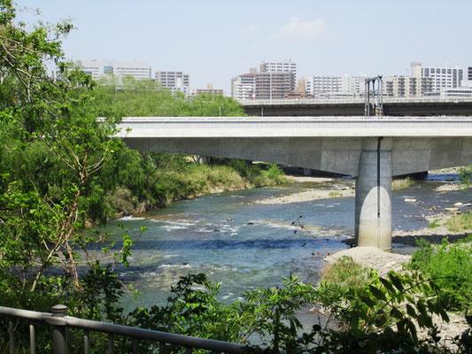 新緑の中から眺める広瀬川 「こんなところあったのね~」暑さの中、感動💛