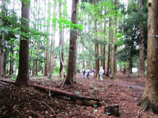 北山五山裏道 初めてこの裏道知りました 木立の中は風が通り抜けます