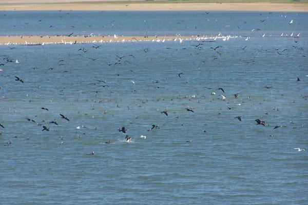 viele Vögel lieben den Lac