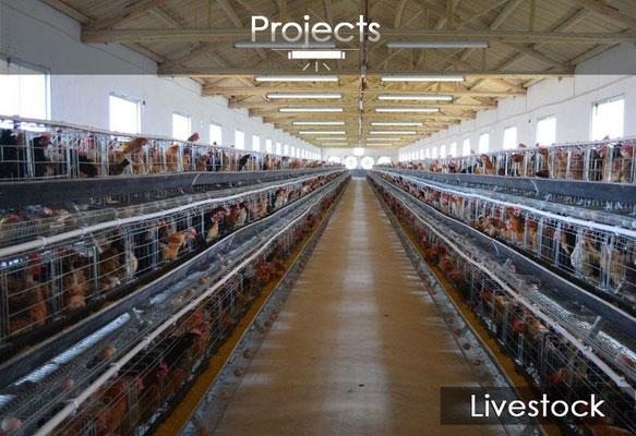 Landwirtschaft und Tierhaltung