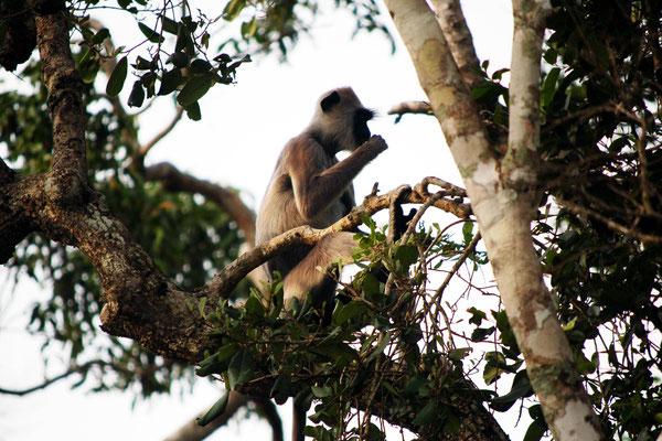 Sri Lanka Urlaub Safari