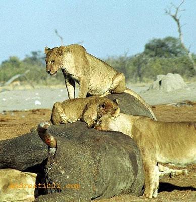 Moremi Game reseve - Botswana