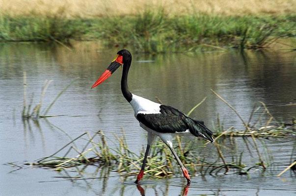 Okawango - Botswana