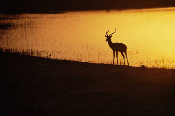 Savuti Game Reserve - Botswana