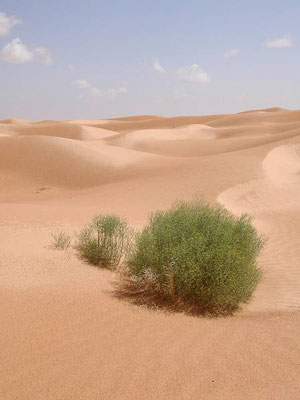 Prime dune da Douz verso Timbaine