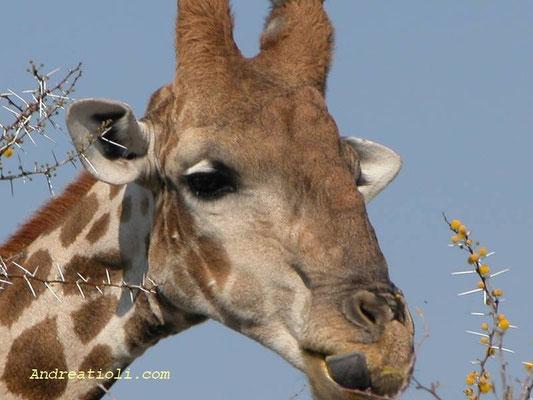 Etosha National Park - Namibia