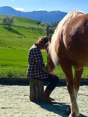 Pferde-Mensch-Beziehung