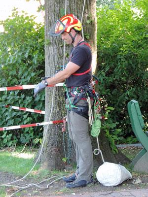 Dringende Baumpflege