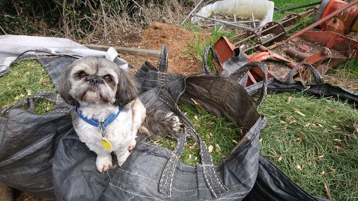 Teddy, le chien de Paul veille au grain