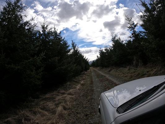 Direction Naseby, Central Otago pour la récolte de pin Ponderosa