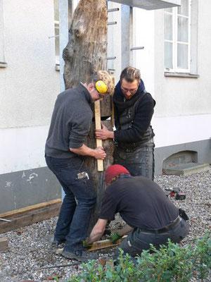 Der Eichenpfahl aus dem 17. Jahrhundert wird aufgestellt.