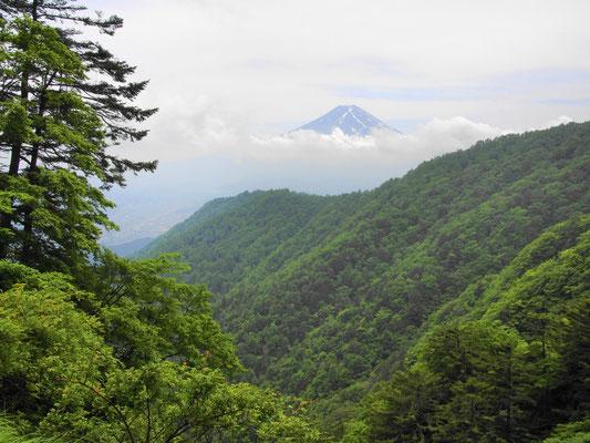 更に登ると雲に浮かぶ富士山(^^♪