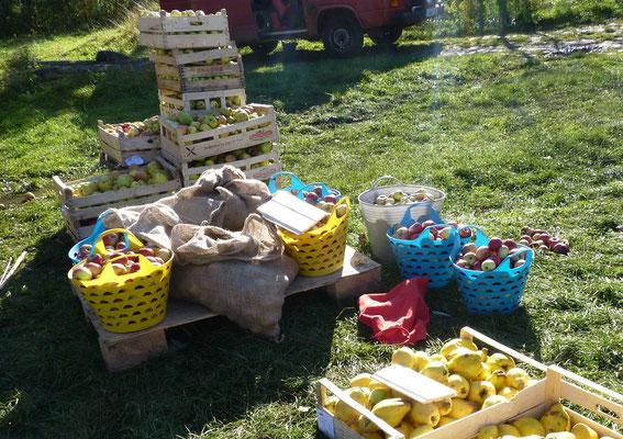 Kisten- und Säckeweise werden die Äpfel zum Mosten gebracht.