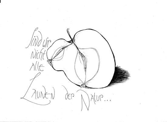 Pommernscher Krummstiel - ein Apfel mit Neigung zu seltsamen Formen.