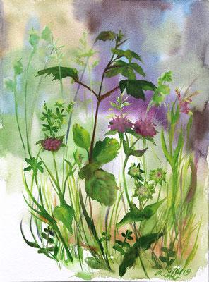 2019_Wiesenwitwenblumen und Wiesenlabkraut_31 x 23cm_Aquarell_Papier