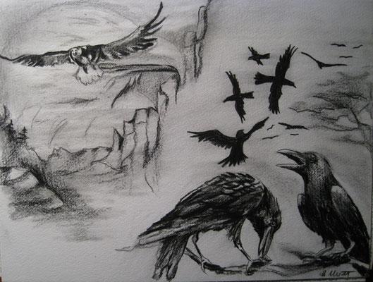 2011_Raben bewegen sich in Schwärmen nur der Adler fliegt allein_30x20cm_Buntstift_Papier