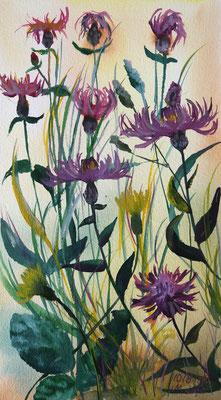 2019_Wiesenflockenblumen_27x15cm_Aquarell_Papier