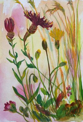 2019_Wiesenflockenblume und Rotklee_19x14cm_Aquarell_Papier