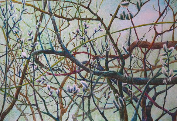2013_Serie 5 Elemente Holz_40x30cm_Buntstift_Papier