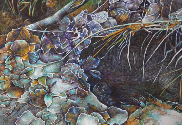 2013_Serie 5 Elemente Wasser_40x30cm_Buntstift_Papier