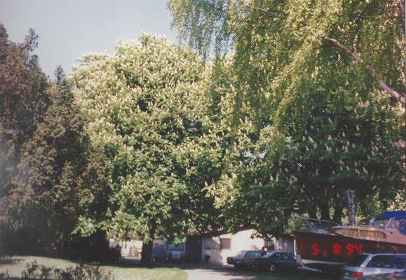 Gelände am Pichelssee im August 1994