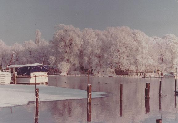 Raureif im Januar 1979 am Pichelssee