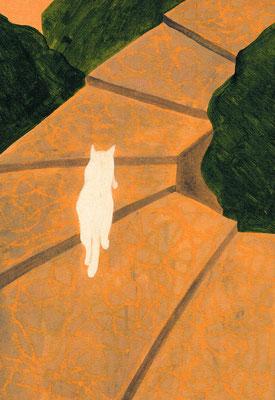 夕方の白猫 / sold