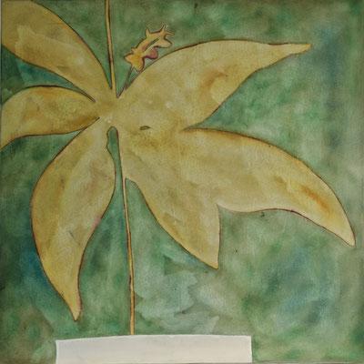 Erbario III, 2001 olio e pigmenti su tela cm 100x100