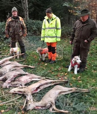 von der Jagd in Dällikon mit drei Foxterriern vom SFC